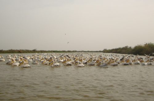 Article : Le parc national de Djoudj, paradis des oiseaux