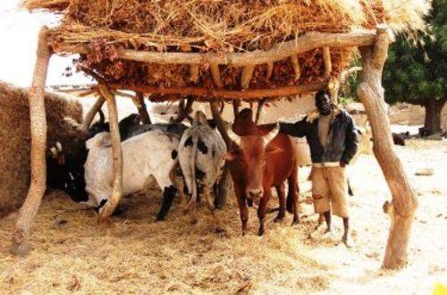 Article : Développer le milieu rural, une nécessité!