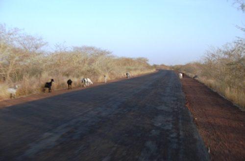 Article : Conte du village : le voyage de l'âne, la chèvre et le chien