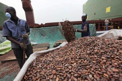 Article : Le cacao Ivoirien à l'heure des reformes pour la campagne 2012-2013