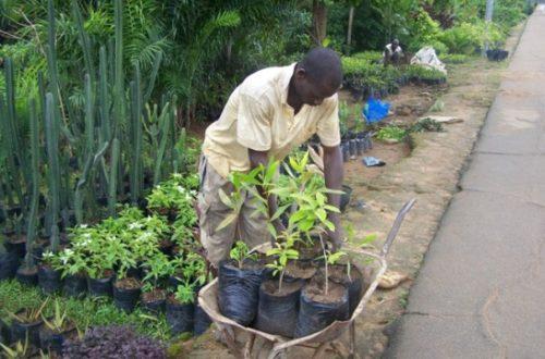 Article : Horticulture : entre passion du jardinage et difficultés quotidiennes