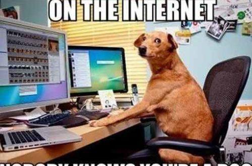 Article : Sur Internet, personne ne sait que tu es un chien