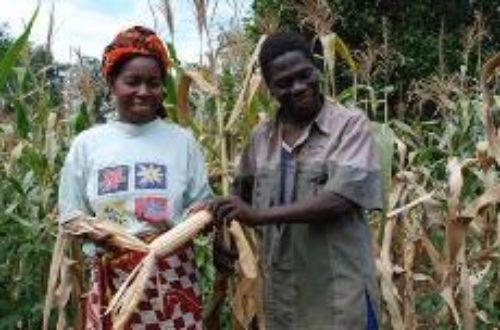 Article : Agriculture togolaise : l'apport des TIC au problème de marché