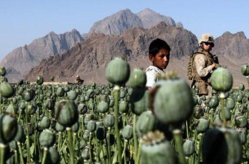 Article : Afghanistan : des opiacés en or…