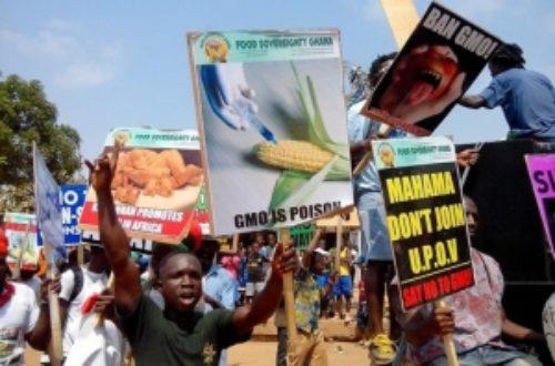 Article : Ghana : les anti-OGM manifestent dans les rues d'Accra