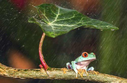 Article : Voilà pourquoi le Nouakchttois n'aime pas la pluie
