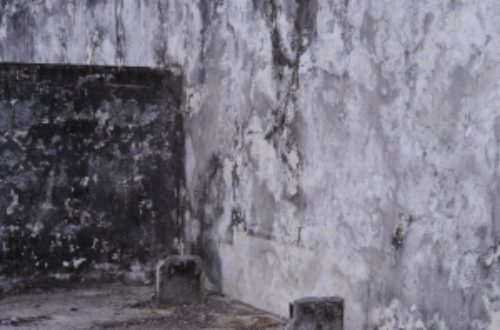 Article : Archéologie du Nouveau monde