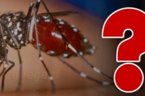 Article : Chikungunya ? Ça peut être dengue !