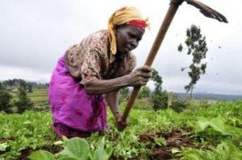 Article : Hommage à la femme, à la productrice de vivriers