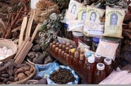 Article : Une décoction qui guérit tout, ça existe à Kinshasa