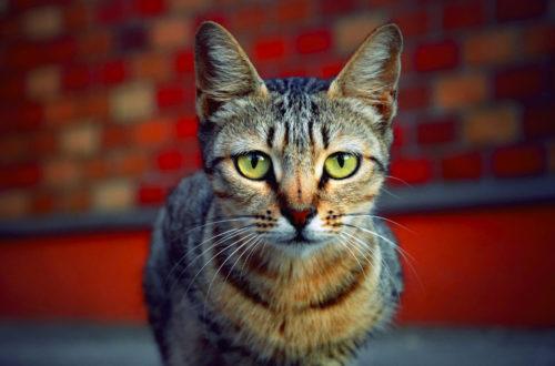 Article : La chatte de ma voisine