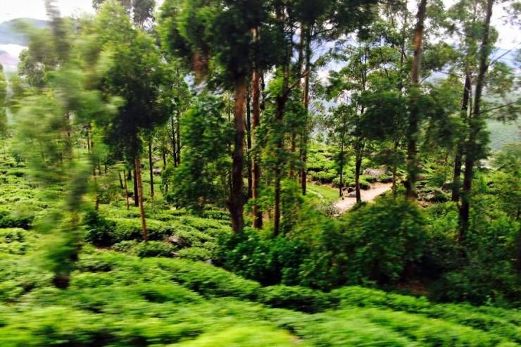 voyager-Sri-Lanka