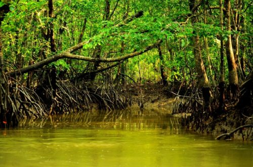 Article : Protection des mangroves: le Laudato Si' du Sri Lanka