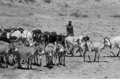 Article : Elevage : une économie qui tient tête en Afrique