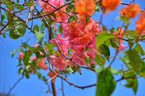 Article : Avec des fleurs tu écris…