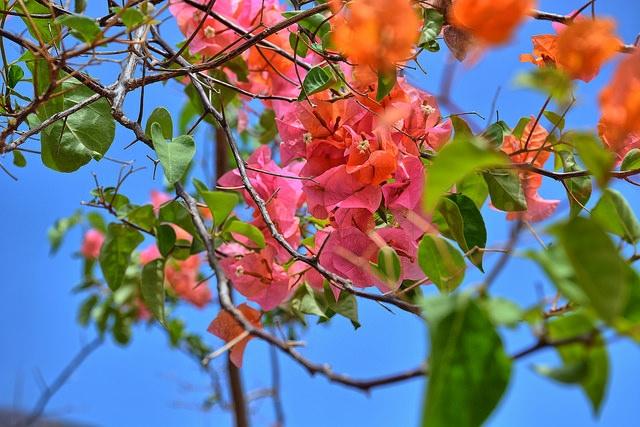 Fleurs Mexique