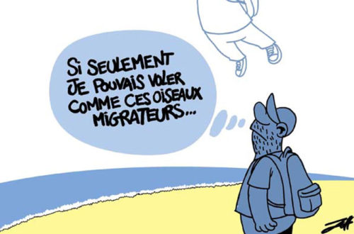 Article : A chacun son mode migratoire