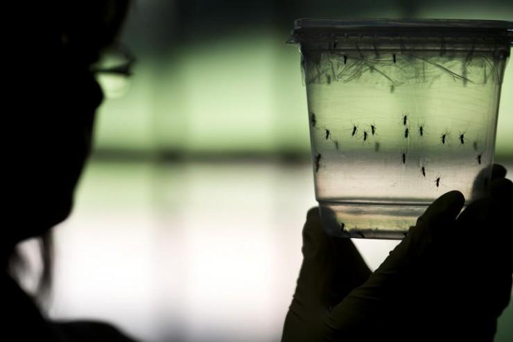 Quand le virus Zika révèle des inégalités sociales au Brésil