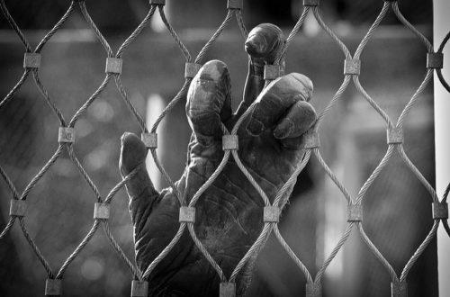Article : Guinée : un trafiquant d'espèces protégées tombe dans le filet d'INTERPOL