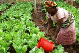 Une femme cultive son jardin