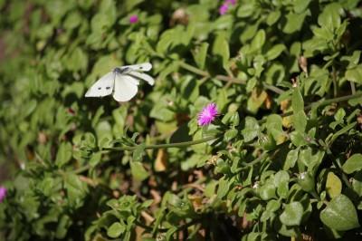 Photo d'un papillon posé sur une fleur