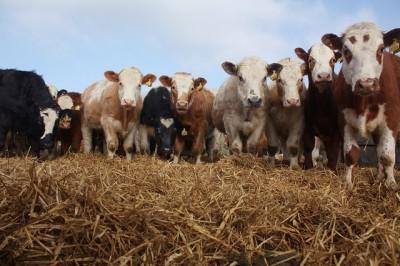 journée mondiale du lait : l'occasion de revenir sur l'état de l'industrie