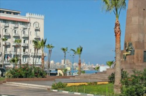 Article : Bientôt, le retour des « samarah » au pays des pharaons