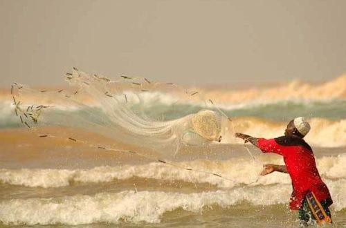 Article : Youpwè: poissons et fruits de mer, entre disparition et empoisonnement