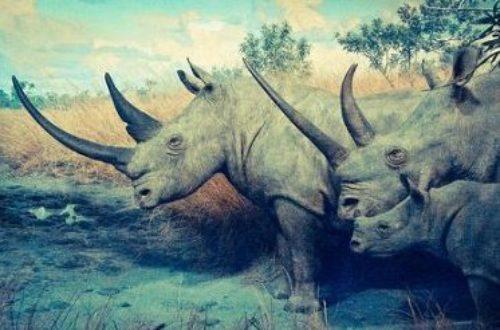 Article : Côte d'Ivoire : les rhinocéros de la réserve d'Abokouamékro en danger