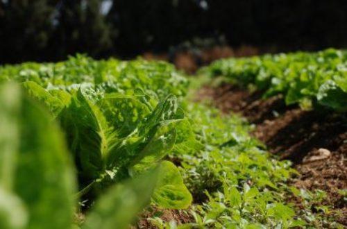 Article : Les freins à l'émergence de l'agriculture africaine