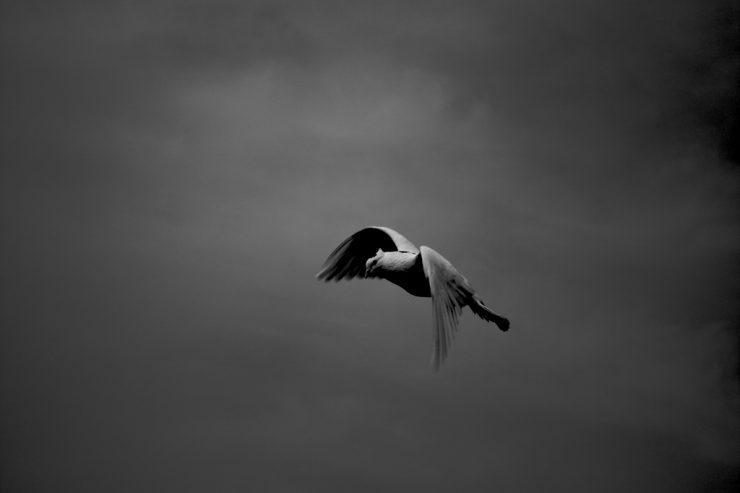 colombe_paix