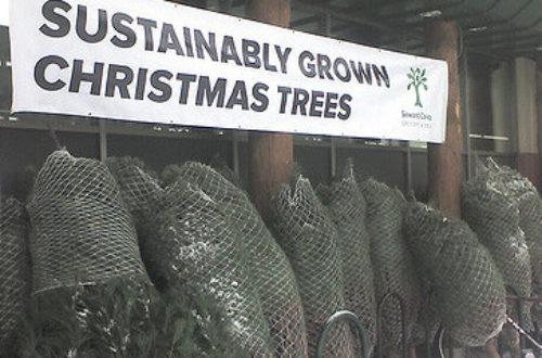 Article : 20 conseils pour un Noël écologique