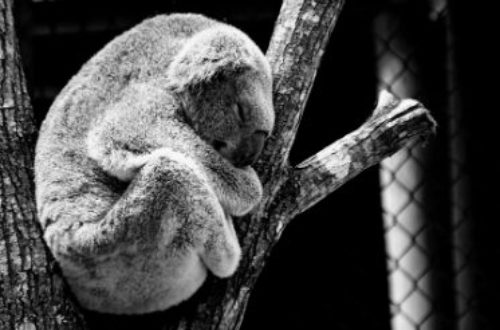 Article : Guide de survie en jungle sociale. #MondoChallenge #LeLundiMatin
