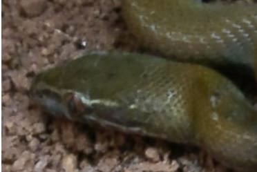 Conseils face aux serpents.