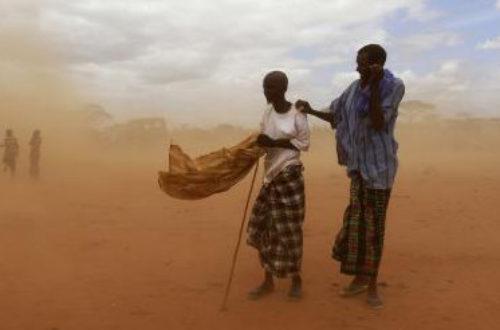 Article : Tchad: La protection de l'environnement est une lutte vouée à l'échec.