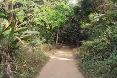 Un jardin botanique au cœur de Conakry en Guinée.