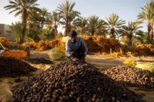 Article : Le projet Erg Smar, un défi face au désert.