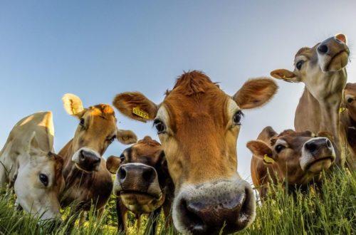 Article : C'est décidé, je deviens végétarien