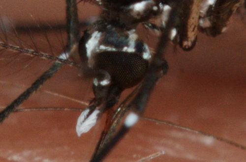 Article : Dix conseils pour se prémunir du paludisme
