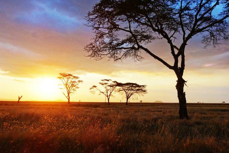 coucher-soleil-savane-paysage