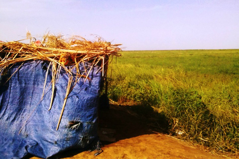 plaine-mpourie-mauritanie-champ-riz-abri-cabane