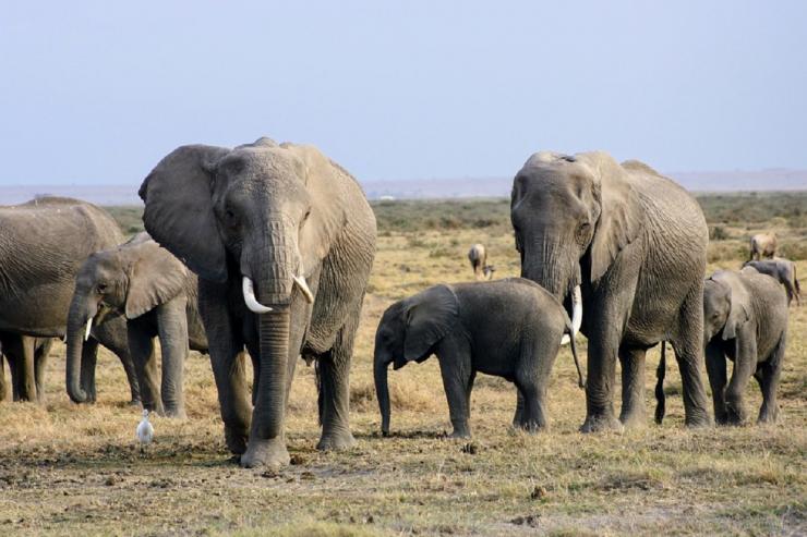 Cote d'Ivoire biodiversite forets