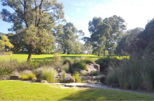 Article : Promenade au jardin botanique de Perth