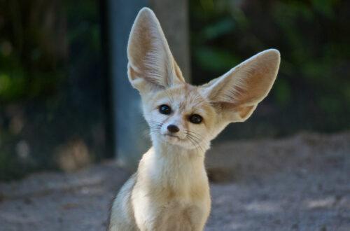 Article : Une paréidolie peut aussi être auditive