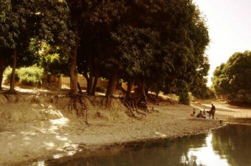 Article : Environnement : pourquoi la journée mondiale des zones humides