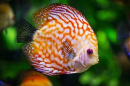 Article : Visite de l'Aquarium Mare Nostrum à Montpellier