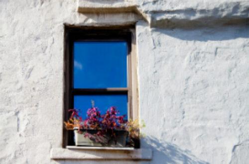 Article : De ma fenêtre, Blida est contée
