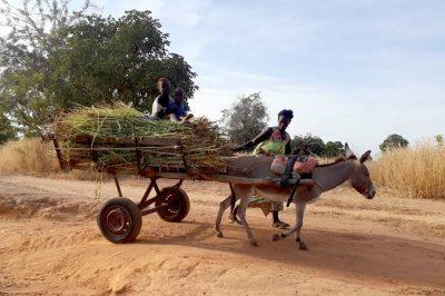 femme-village-Mali-rural-campagne-enfants-travail-chariot-ane