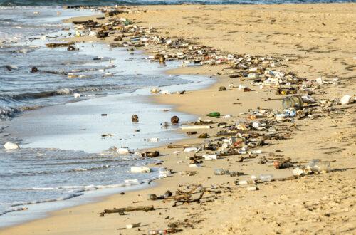 Article : Environnement : combattre la pollution plastique