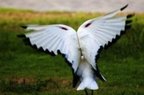 Article : SOS! Je suis malagasy et je cherche des ailes à acheter!